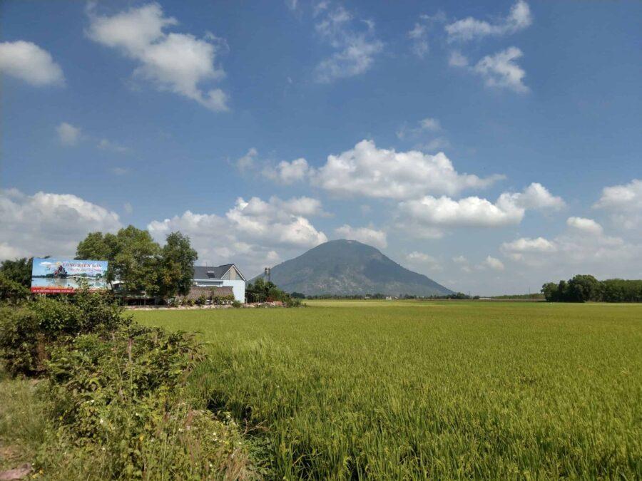 Đồng lúa trên Tây Ninh